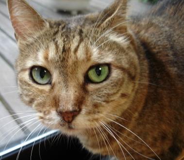 猫の画像 p1_12